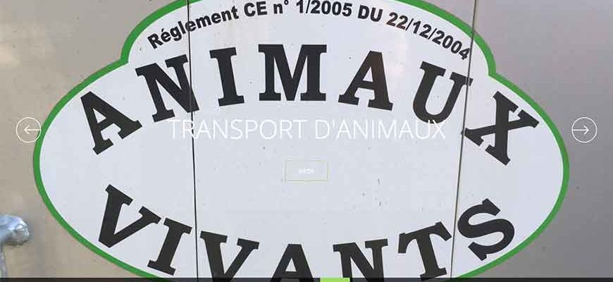 Transport d'animaux Pannier